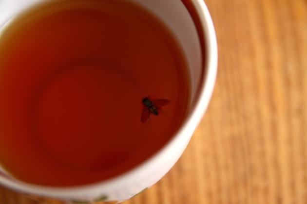 fly in tea